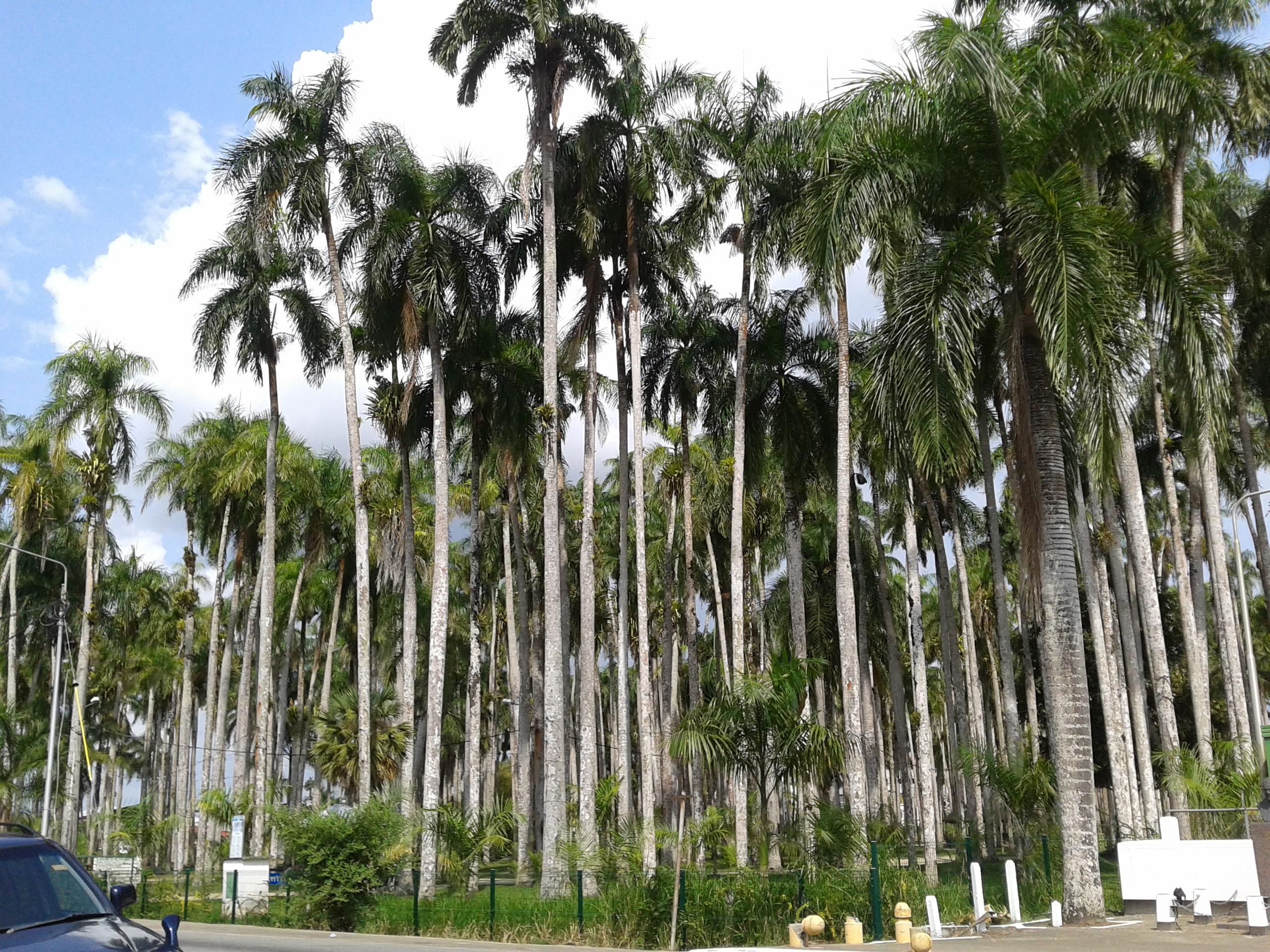 Parque de las Palmeras de Paramaribo, Suriname